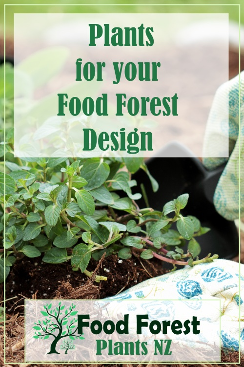 Plants for the 7 Layers of a Food Forest Garden
