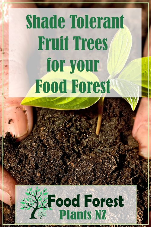 Shade Tolerant Fruit Trees and Plants for New Zealand Conditions