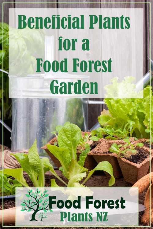 Beneficial Plants to grow in your food forest catered to New Zealand and other temperate climates
