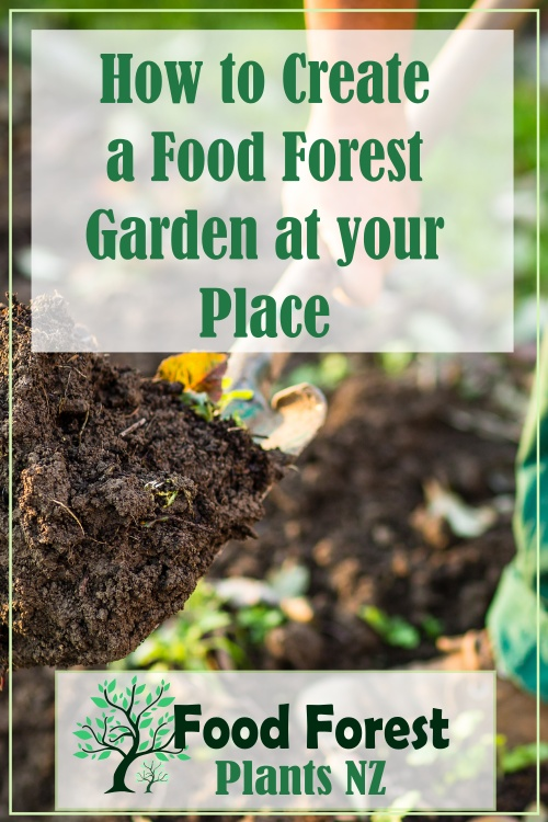 How to create a food forest garden in your backyard - food forest design ideas