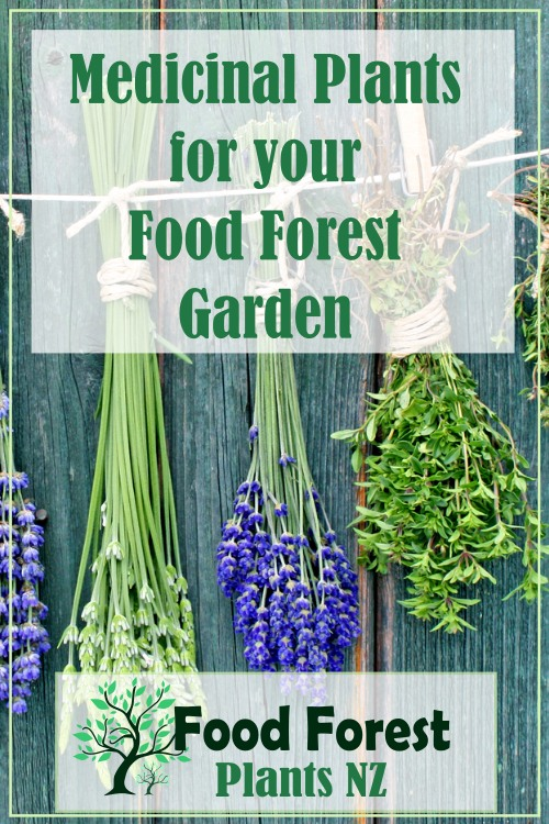 Medicinal Herbs plant list to grow in a food forest garden using permaculture principals