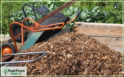 finding free mulch and manure ideas for growing a food forest garden using permaculture