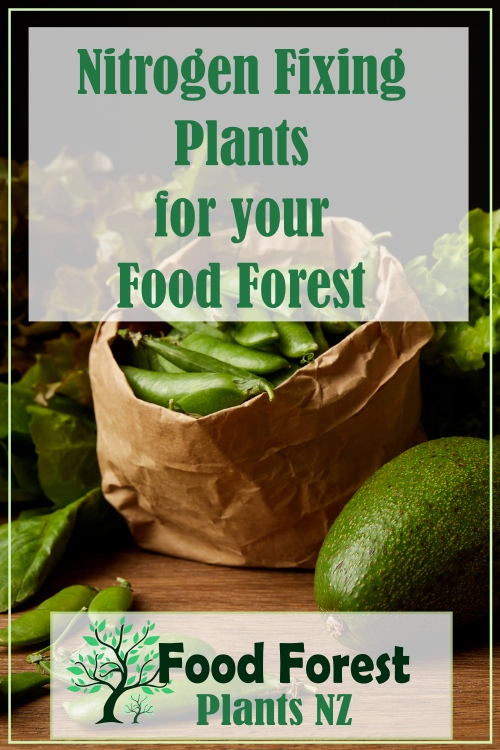 Nitrogen fixing plants pdf list for food forest