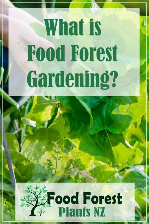What is Food Forest Gardening
