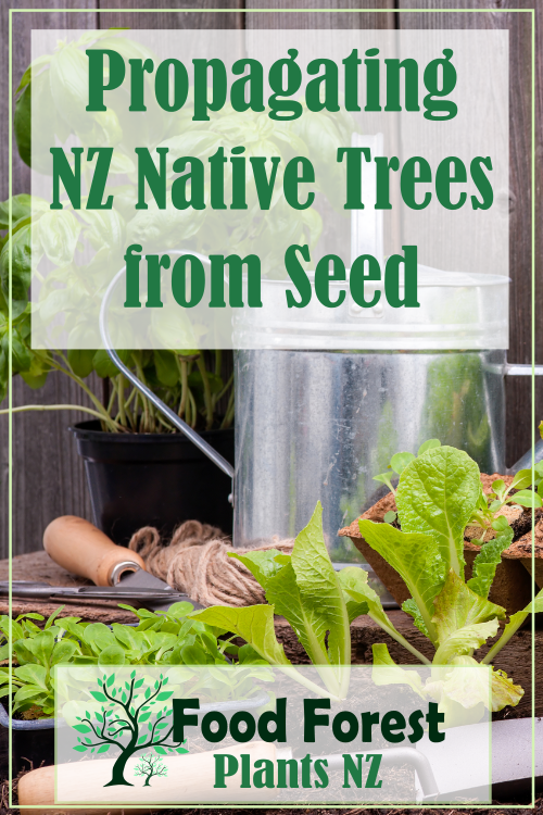 Propagating NZ native trees from seed
