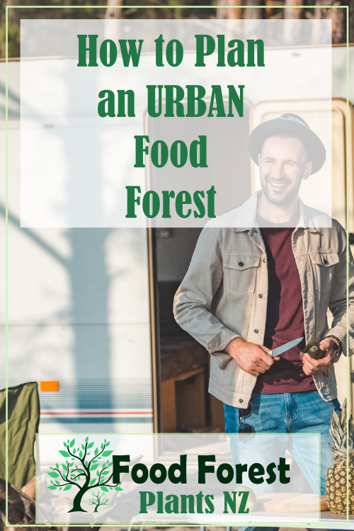 How to plan and plant an urban food forest in New Zealand.