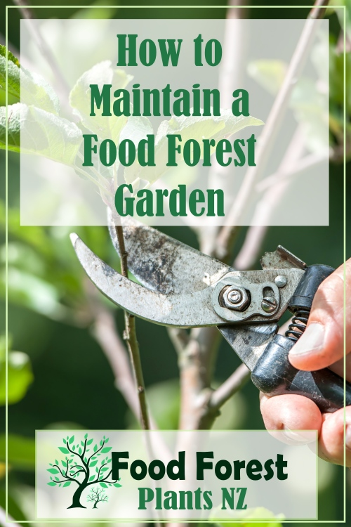 5 steps to maintaining a food forest garden to ensure it produces prolific harvests
